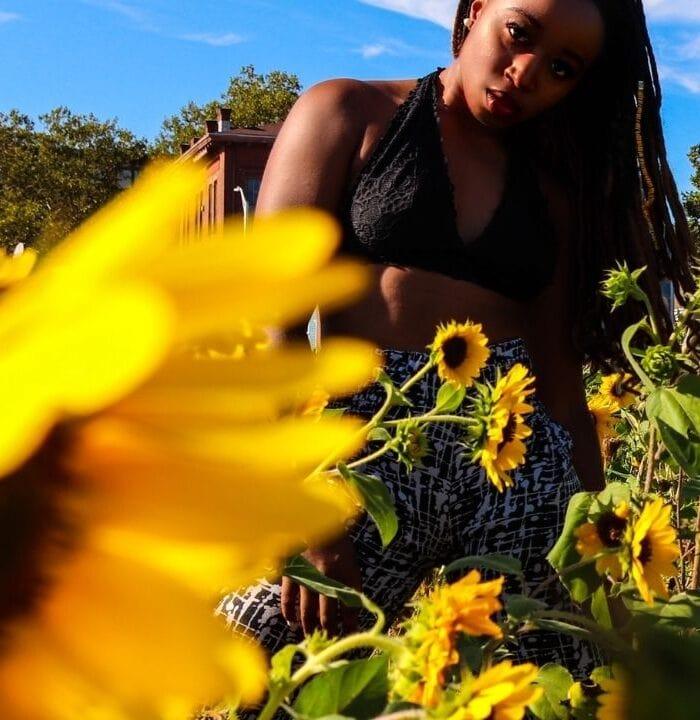 providence Rhode Island 10000 sunflowers